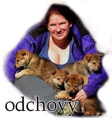 http://www.sdivokoukrvi.cz/odchovy