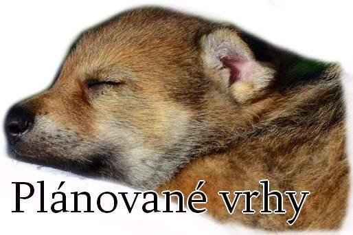 http://www.sdivokoukrvi.cz/planovane-vrhy