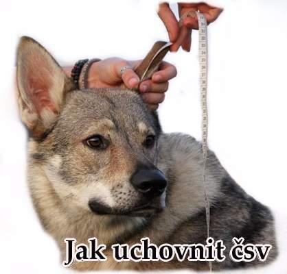 http://www.sdivokoukrvi.cz/pro-zacinajici-majitele-csv
