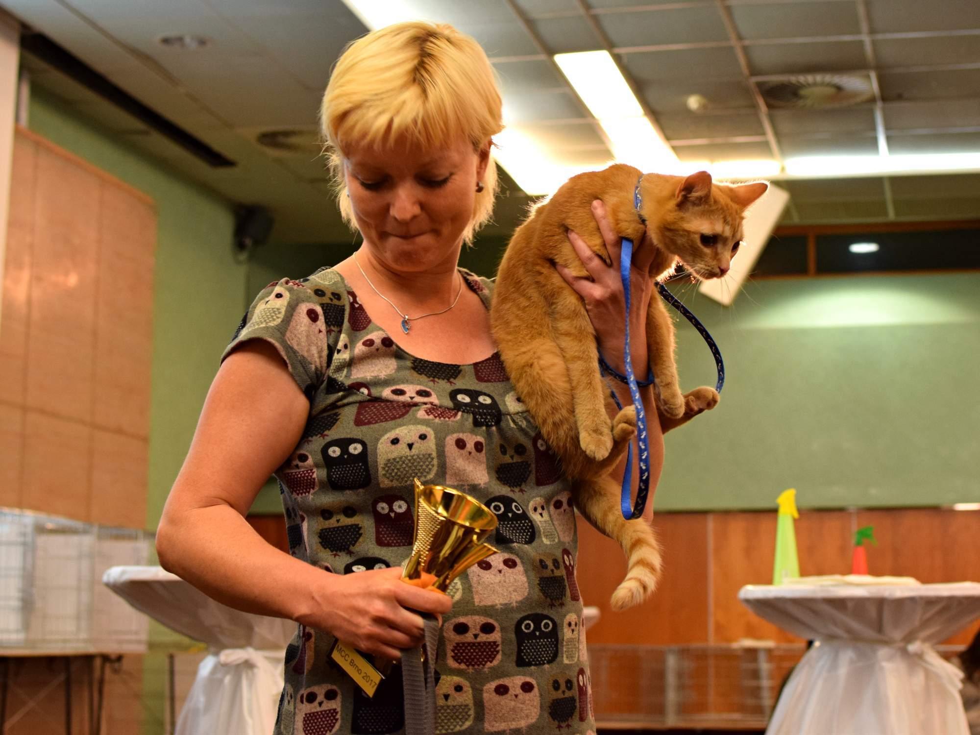 Cenu diváků Miss Voroněž vyhrála obyčejná domácí kočka zrzek. Foto: Lenka Jebáčková