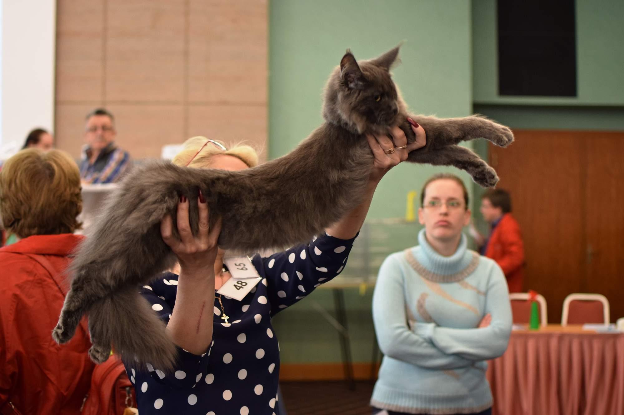 Majitelka představuje svou kočku porotě. Foto: Lenka Jebáčková