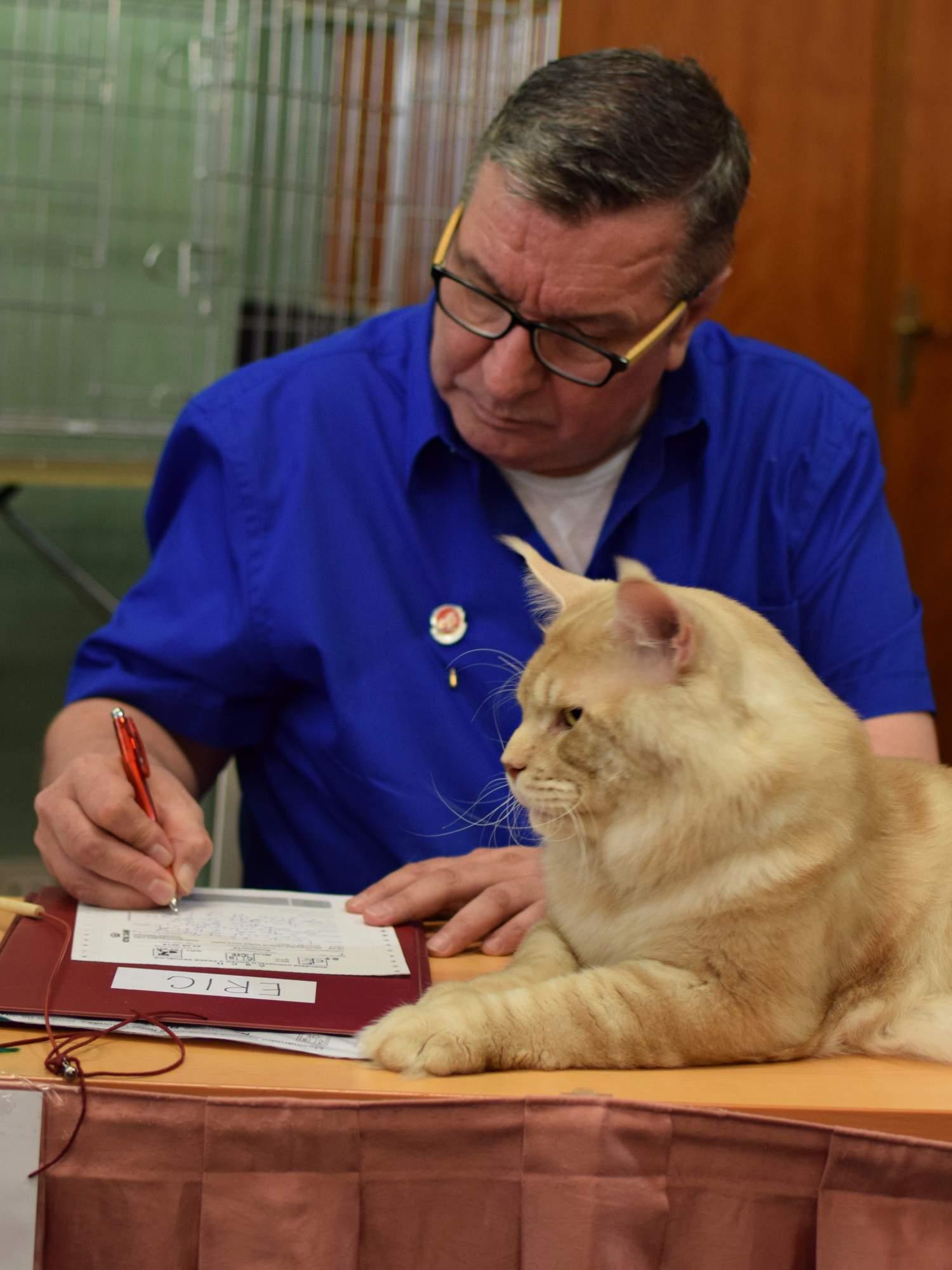 Posuzování koček. Foto: Lenka Jebáčková