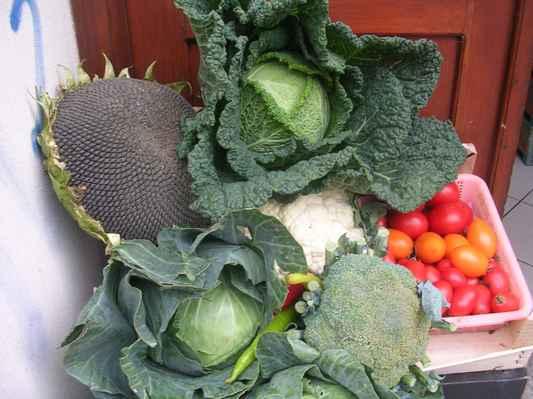 Slunečnice a zelenina