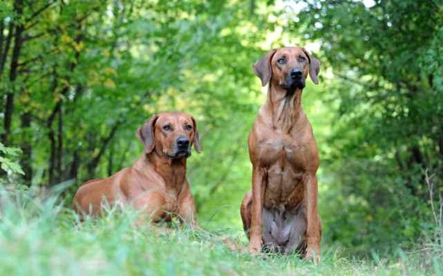 My Zaki od Cykasu a Minnie od Cykasu (Inanda Mellberg Edelrood & Izzy Iff od Cykasu) bratr a sestra