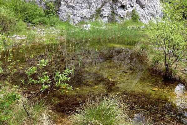 Lom Kotouč - Botanická zahrada - Rostliny tu mají klid a mohlo by se tu dařit i vzácným druhům.