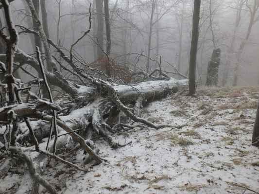prales na jižním svahu hory je chráněn od roku 1906 a od roku 1949 je chráněn porost na celém vrcholku studence...