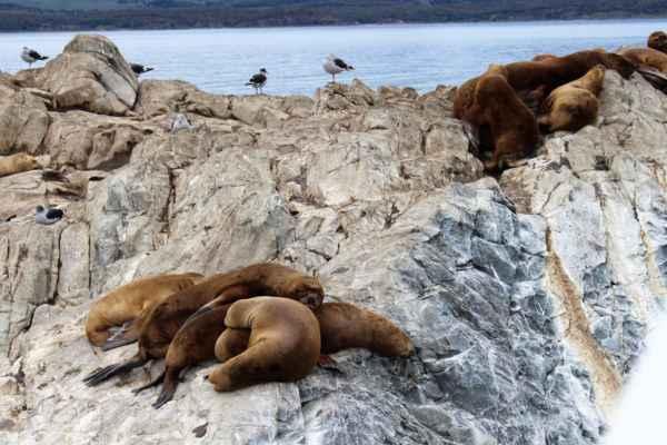 tuleni se tulí