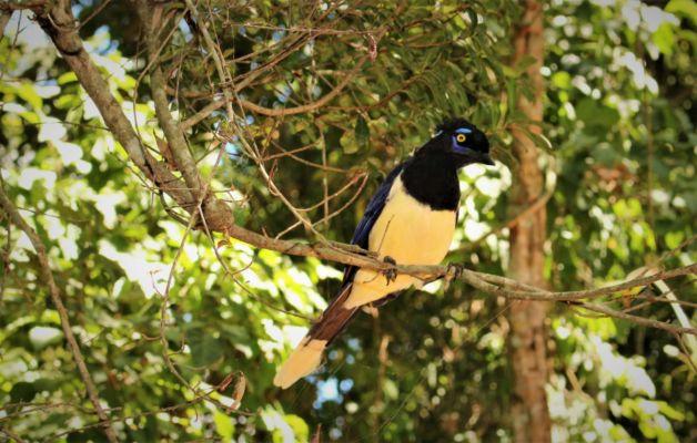 můžeme fotit ptáky zpěváky
