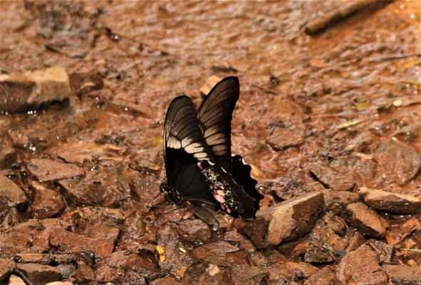 nezašlápnout motýlky